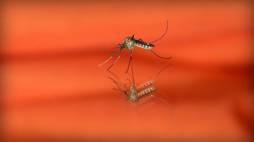mosquitoblog